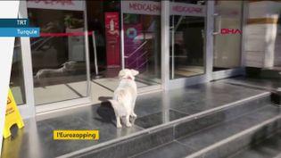 Ce chien a attendu son maître six jours devant un hôpital en Turquie (FRANCEINFO)