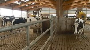 Agriculture : les robots s'invitent dans les fermes (FRANCE 3)