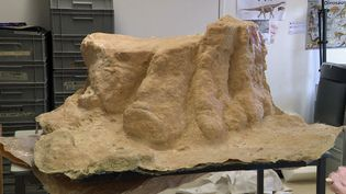 L'empreinte du dinosaure fraichement démoulée au musée d'Angoulême (Charente) (France 3 Nouvelle Aquitaine)