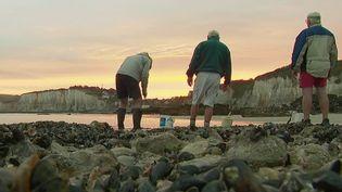 Littoral : les grandes marées font la joie des pêcheurs à pied (FRANCE 2)