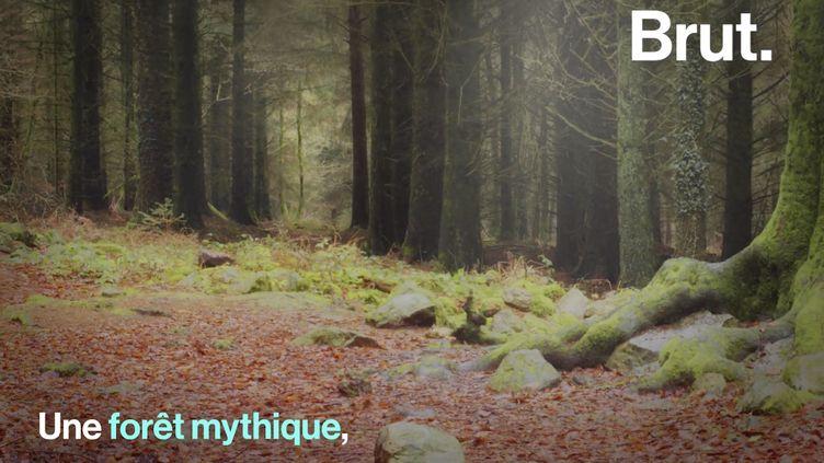 VIDEO. On vous emmène dans l'inspiration de la légendaire forêt de Brocéliande (BRUT)