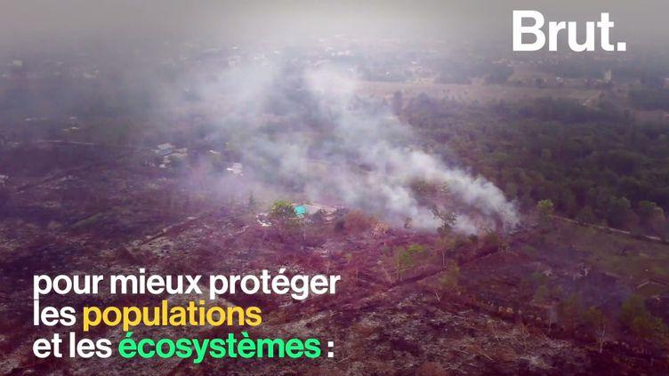 VIDEO. Feux de forêt : quels enjeux ? (BRUT)
