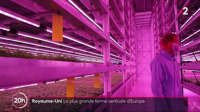Angleterre : la ferme du futur fait pousser les herbes aromatiques à la verticale