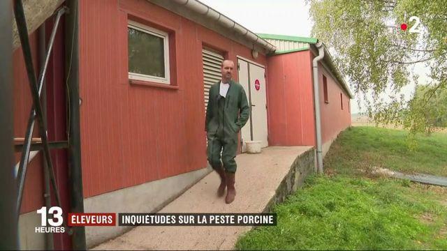Peste porcine : l'infection de deux sangliers en Belgique sèment la panique chez les éleveurs français