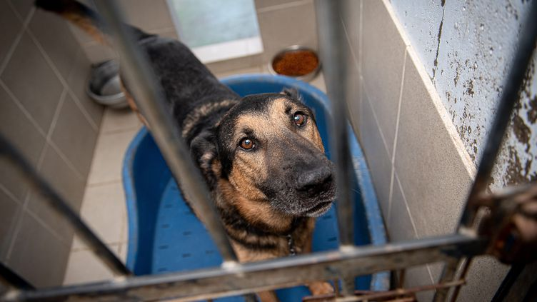 Un chien abandonné, disponible à l'adoption dans un refuge pour animaux à Lille (Nord), le 30 juillet 2019. (MAXPPP)