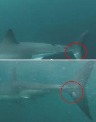 Montage photo réalisé à partir de la vidéo de Terry Tufferson publiée le 11 juin 2014. (LIFE IS SAVAGE / YOUTUBE / FRANCETV INFO)