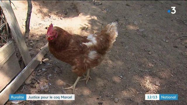 Ardèche : un coq assassiné par un voisin excédé