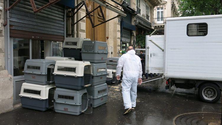 (De nombreux animaux ont été saisis dans les animaleries du quai de la Mégisserie le 10 juin © MAXPPP / Photo PQR / Le Parisien)