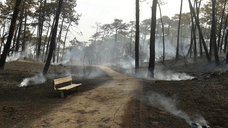 La forêt de Chiberta à Anglet (Pyrénées-Atlantiques) au lendemain de l'incendie qui a touché la commune, le 31 juillet 2020. (GAIZKA IROZ / AFP)