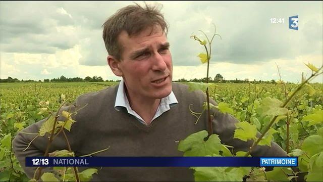 Patrimoine viticole  : la plus vieille entreprise de France