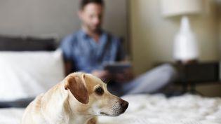 Le chien a mis fin aux agissements de son maître, qui maltraitait sa compagne. (SG HIRST / IMAGE SOURCE / AFP)
