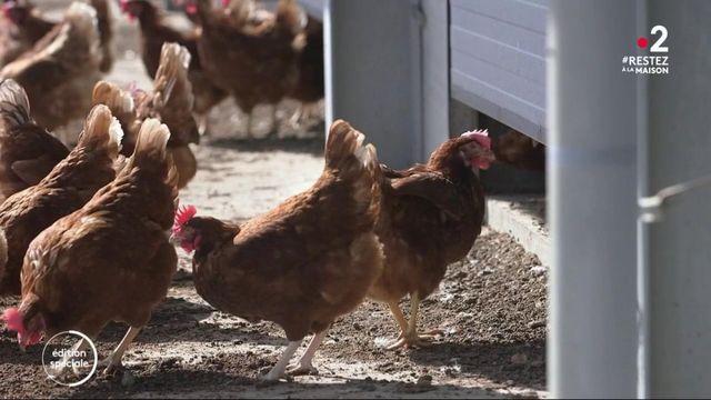 Confinement: les achats d'œufs en hausse