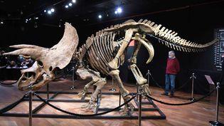 """""""Big John"""", le triceratops vendu aux enchéres le jeudi 21 octobre 2021 à l'hôtel Drouot à Paris. (MAXPPP)"""