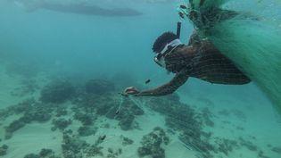 Un jeune Malgache plonge dans l'eau pour pousser les poissons dans son filet. (ANTOINE DEMAISON / AFP)