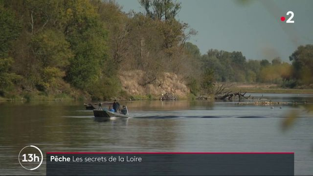 Pêche : valoriser les poissons de la Loire