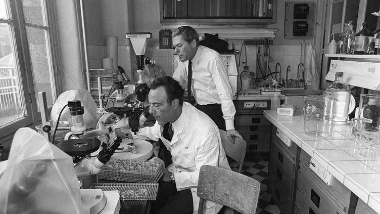 Le biologiste François Jacob dans son laboratoire, le 24 février 1971, à Paris. (- / AFP)