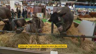 Des vaches de la race bazadaise (FRANCEINFO)