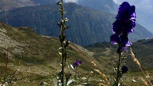 Objectif de la journée avec le Crea : faire l'inventaire de la flore sur un site d'études dans le massif du Mont-Blanc (Franceinfo / M. Herenstein)