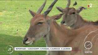 Des animaux au Zoo African Safari. (France 2)