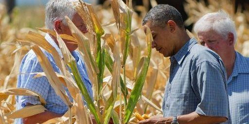 Le président Obama inspecte un champ de maïs touché par la sécheresse dans la vallée du Missouri aux Etats-Unis en 2012. (JIM WATSON / AFP)