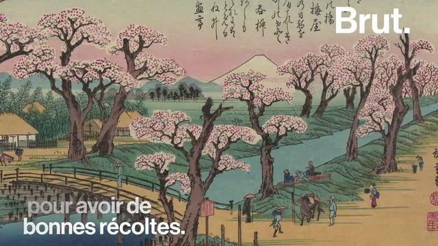 Au Japon, les cerisiers en fleurs marquent le retour du printemps