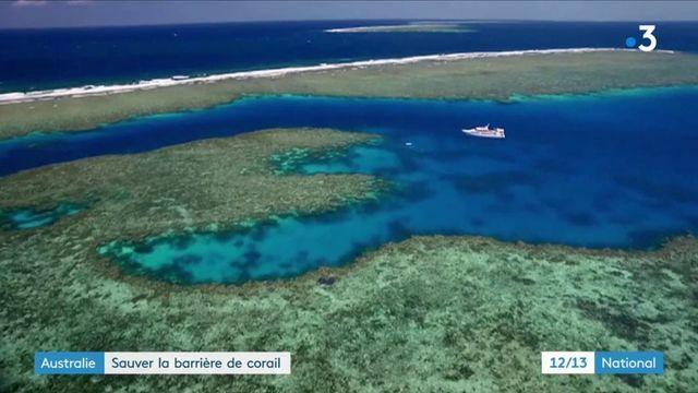 Australie : sauver la barrière de corail