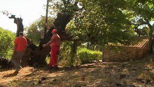 Incendie dans le Var : les conditions météorologiques s'améliorent (France 3)