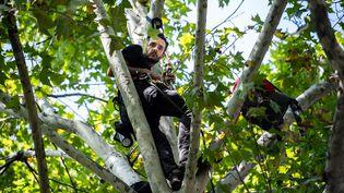 Thomas Brail est resté perché 28 jours dans un platane en face du ministère de la Transition écologique à Paris en septembre 2019. (MARTIN BUREAU / AFP)