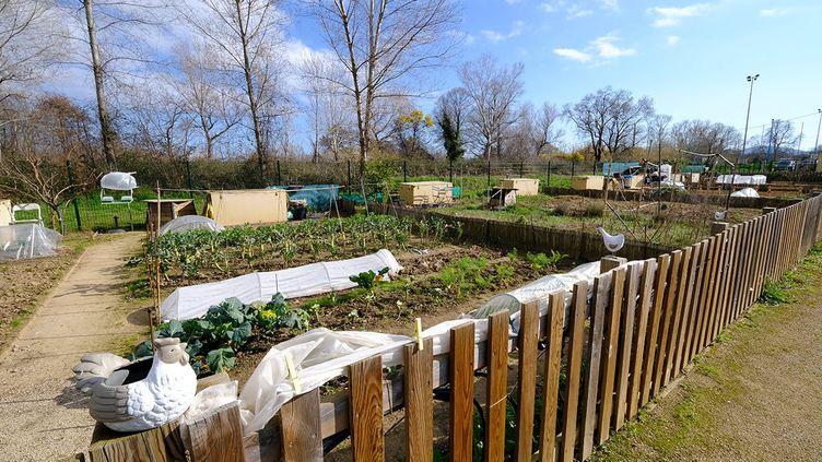 Les jardins partagés sontinstallés dans le quartier du Capitou, à Mandelieu-la-Napoule. (ISABELLE MORAND / DIDIER HIRSCH / RADIO FRANCE / FRANCE INFO)