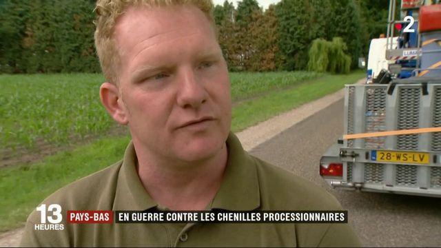 Pays-Bas : l'invasion de chenilles urticantes déclenche une alerte sanitaire