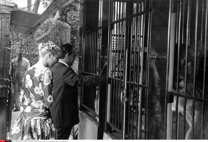 Rainier passant le bras dans la cage du tigre. Geste qui dit-on impressiona beaucoup la jeune actrice. (DALMAS/SIPA)
