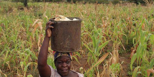 Paysanne transportant du maïs sur sa tête à Chivi, à quelque 380 km au sud-est de Harare, le 1-4-2012. (Reuters - Siphiwe Sibeko)