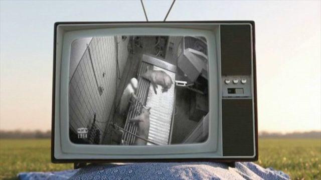 """Mis en cause par une vidéo de L214, un employé d'abattoir se confie à """"Envoyé spécial"""""""