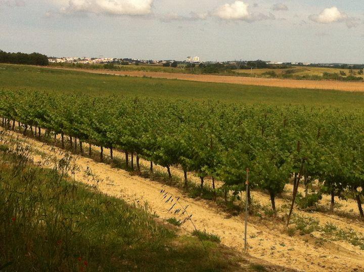 Certains viticulteurs protestent régulièrement contre l'importation de vins espagnols à bas prix sous des étiquetages trompeurs qui laissent penser que ce sont des vins français. (RADIO FRANCE / GRÉGOIRE LECALOT)