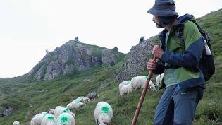 Pyrénées : il a tout plaqué pour devenir berger (France 2)