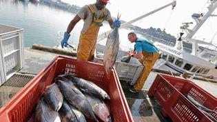 Des pêcheurs débarquent du thon blanc sur le port de Concarneau (Finistère), le 19 septembre 2014. (  MAXPPP)