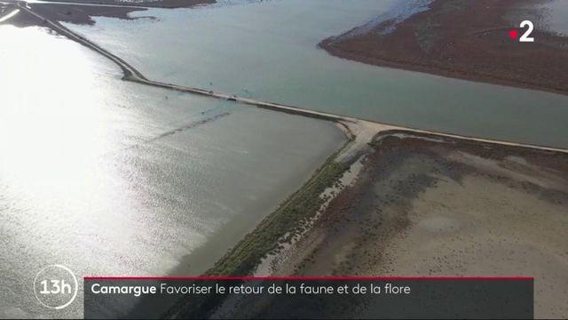 Camargue : des travaux réalisés dans les marais salants pour faire revenir la nature