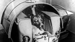La chienne Laïka dans une capsule pressurisée, à Moscou, avant son départ dans le Spoutnik, en 1957. (RIA NOVOSTI / AFP)