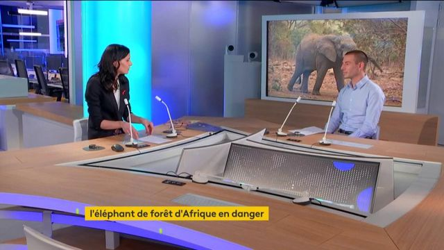 Eléphants menacés : ITW Paul Esteve