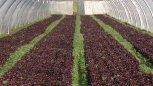 La saison des récoltes a commencé et les agriculteurs manquent de main-d'oeuvre. Habituellement, ce sont les saisonniers, pour beaucoup venus de l'étranger, qui assurent cette mission. (FRANCE 3)