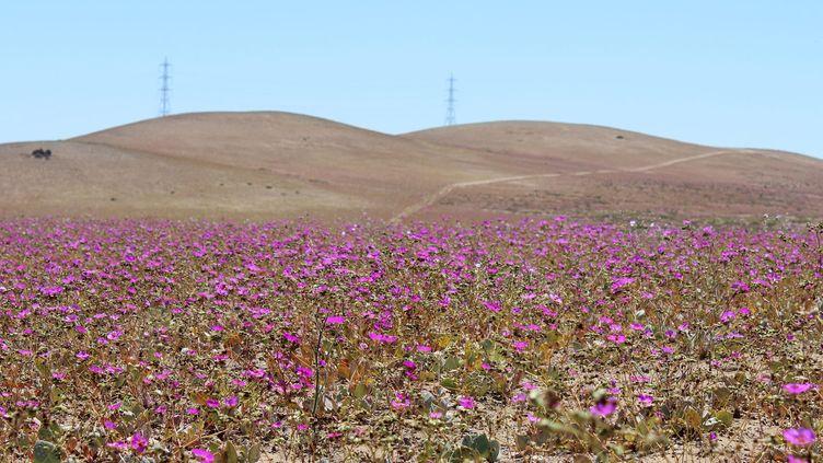 Le désert de l'Atacama (Chili), le 11 octobre 2015. (ALONSO SEPULVEDA / NOTIMEX / AFP)