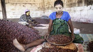 les fèves de cacao sont sélectionnées à la main par les femmes. (Géo  Giulio Di Sturco)