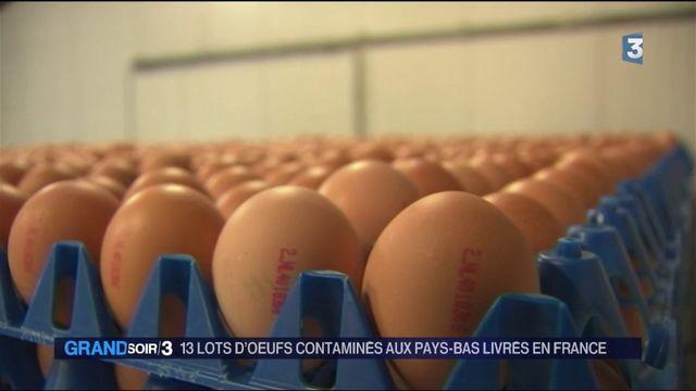 13 lots d'oeufs contaminés aux Pays-Bas livrés en France