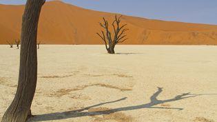 Le désert africain, en 2021 (MARCO VALENTINI / BIOSPHOTO)