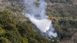 Un Canadair intervient sur un incendie dans le village de Chiatra, en Corse, le 4 janvier 2018. (PASCAL POCHARD-CASABIANCA / AFP)