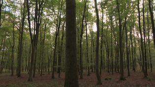 L'ONF plante, en forêt de Chantilly, des arbres venus du Sud pour emplacer ceux qui dépérissent à cause de la sécheresse. (N. Ben Ghezala / France Télévisions)