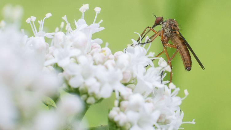 Un insecteposé surune fleur, le 24 juin 2021, à Hanovre (Allemagne). (JULIAN STRATENSCHULTE / DPA / AFP)