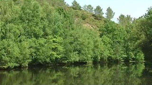 Brocéliande : une forêt magique