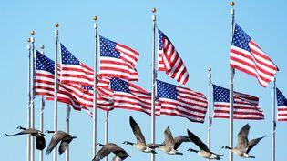 Vol d'oies sauvages devant les drapeaux du Washington Monument à Washington (Etats-Unis), le 20 janvier 2013. (JOE KLAMAR / AFP)