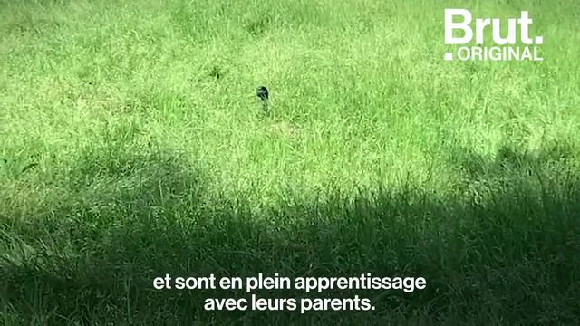 Pendant deux mois, les parcs parisiens ont été préservés du public et la biodiversité s'y est développée comme jamais. Aujourd'hui, certains souhaitent la protéger. Voilà comment…